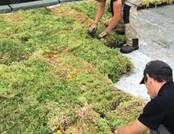 Toit végétalisé toit terrasse ou inaccessible <br>en ile-de-France