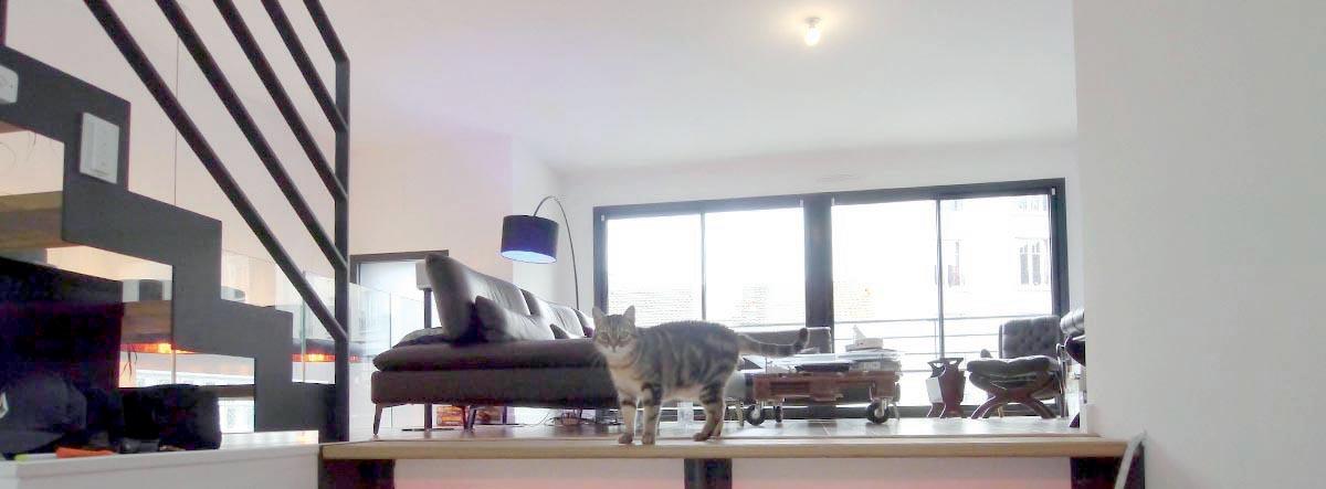 Le chat fait salon